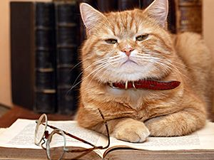Top 10 Reasons to Adopt a Senior Cat MiscPhoto-SeniorCatTop10-01