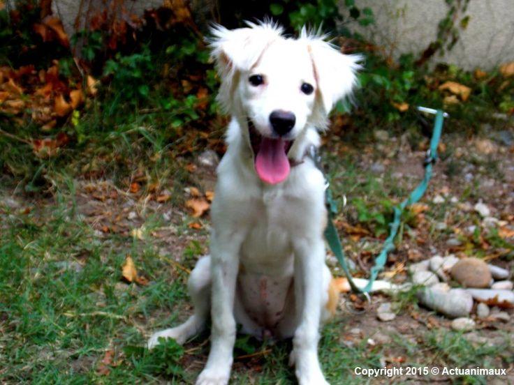 ACTU Animaux - Lyra, 5 mois, chienne errante, épuisée, nourrie de cailloux