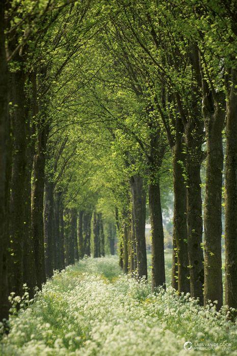 The Light and the Green by Lars van de Goor