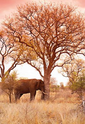 Peter Lik Photography~ two of my most favorite things in the world! elephants and trees!!!!