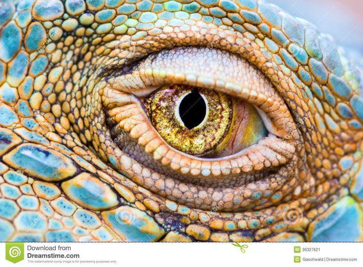 iguana eye painting - photo #11