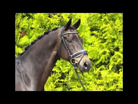 www.sporthorses-online.com 2004 St Georges gelding for sale