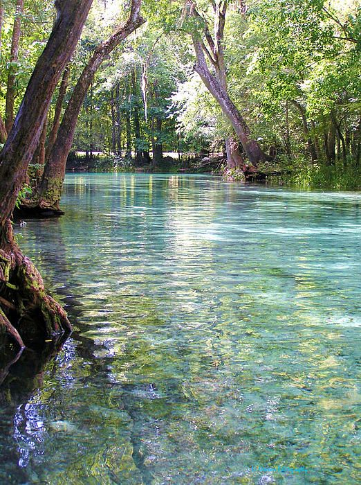 Ginnie Springs Florida. Want to return residence and float a while.