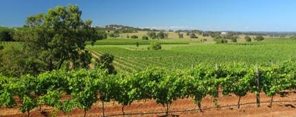Lush Hunter Valley Vineyards