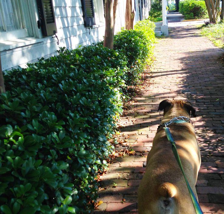 Best Hot Dogs In Savannah Gerogia
