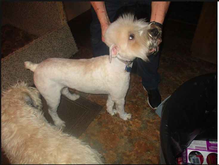 Worst haircuts have ever seen. Poor thing