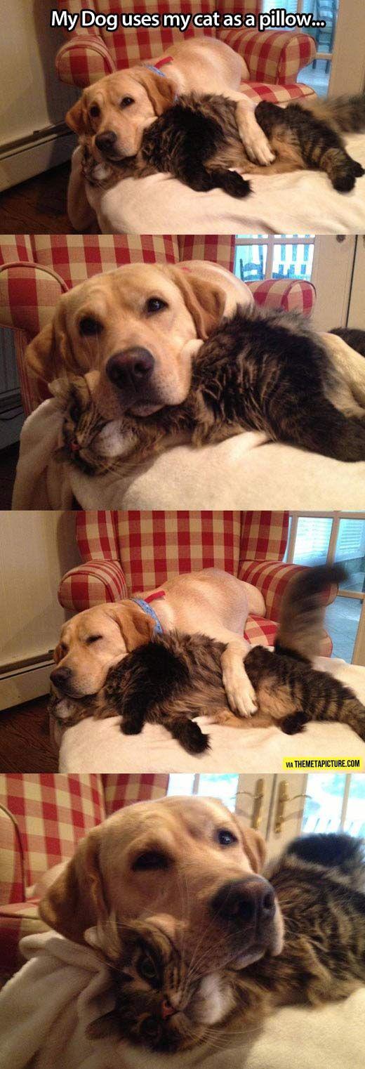 Comfy pillow cat…