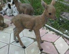 Maltese Puppies Khan Statue