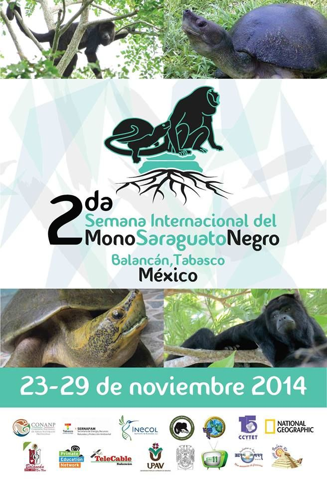 Happy International Black Howler Monkey Week (Segunda Semana Internacional del Mono Saraguato Negro)! Follow updates from the event at https://www.facebook.com/pages/Segunda-Semana-Internacional-del-Mono-Saraguato-Negro/627872843997300!