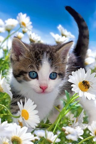 Blue-eyed cutie, daisies and the bee • photo: Tom Pingel on Shutterstock http://www.shutterstock.com/gallery-573553p1.html