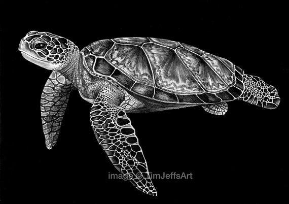 Sea Turtle Ink Drawing Artist Tim Jeffs Animal Art drawings