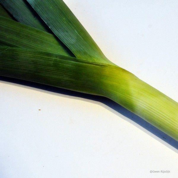 prei (foto: Gwen Rijsdijk) Recept: linzen-prei bijgerecht