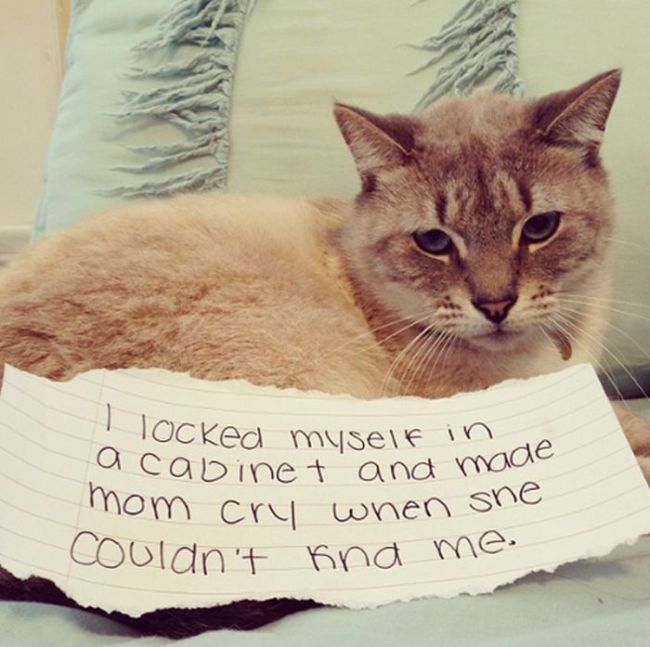 Cat Shaming | Shame on you, furry monster.First part:Cat Shaming (25 pics)