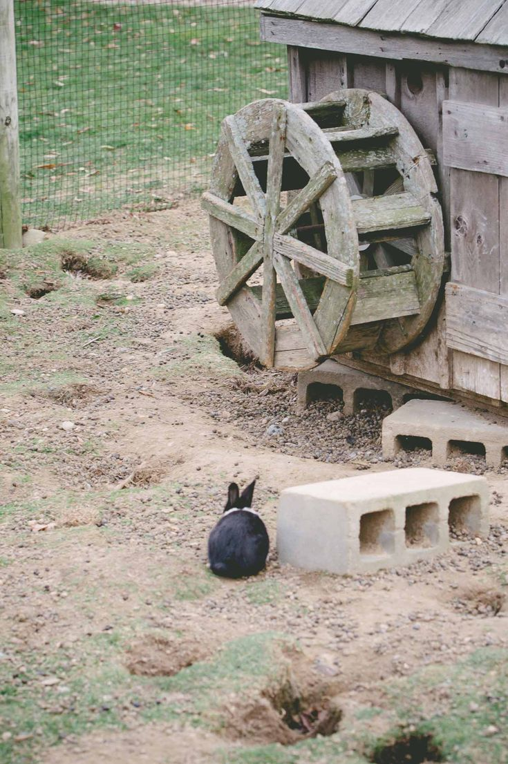 Image result for bunnyville