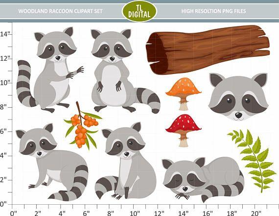 Mejores 139 imágenes de raccoon en Pinterest | Artesanía de mapache ...