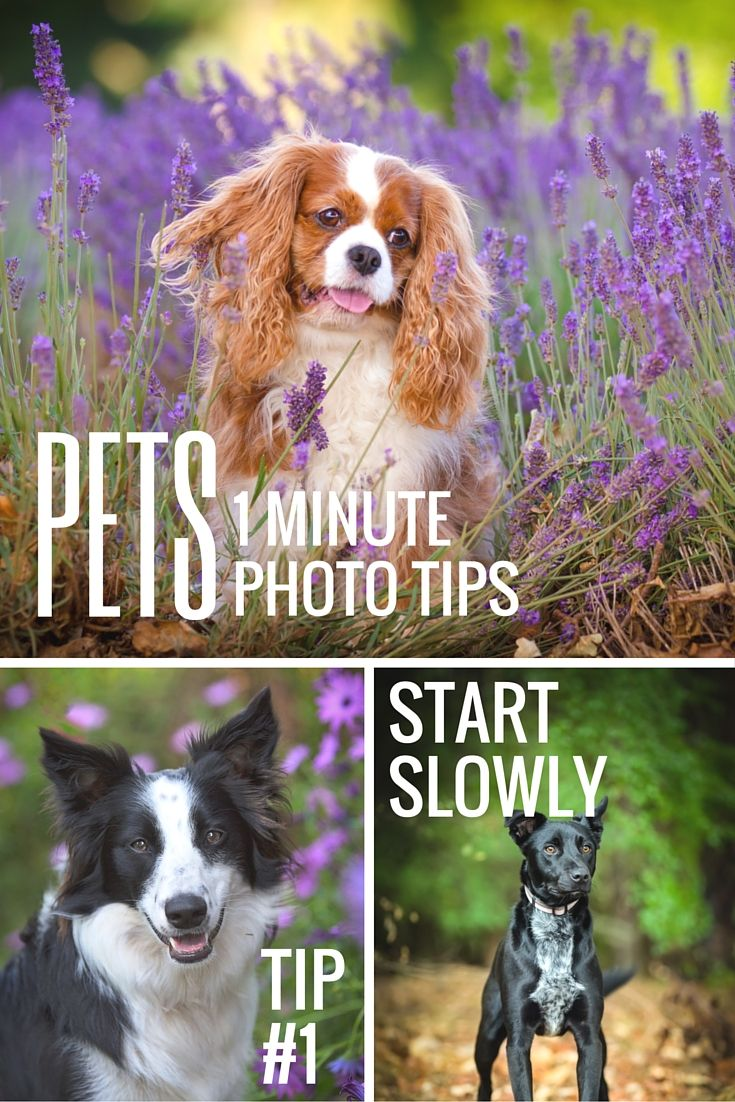 pet photography tip #1 start slowly