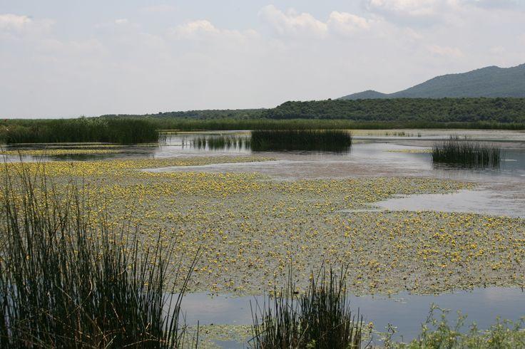 Gala Gölü, 2005 yılından bu yana milli park özelliği de taşımaktadır. 6 bin hektarlık bir alanda kendini gösteren Gala Gölü Milli Parkı, kuş zenginliğiyle kendi gökyüzünde adeta bir görsel şov sunuyo