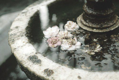 Flowers floating on water in a fountain .. just beautiful. Gardens | faded | nature | water | countryside | grandeur