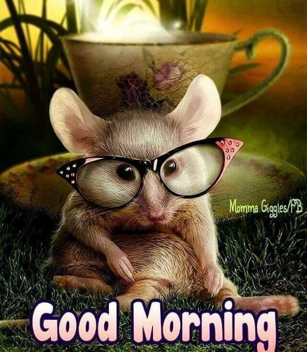 Мышь в очках картинки