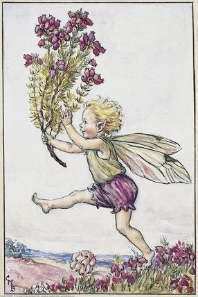 Illustration for the Heather Fairy from Flower Fairies of the Summer. A small boy fairy runs from left to right, holding a branch of heather in his right hand.    Author / Illustrator  Cicely Mary Barker