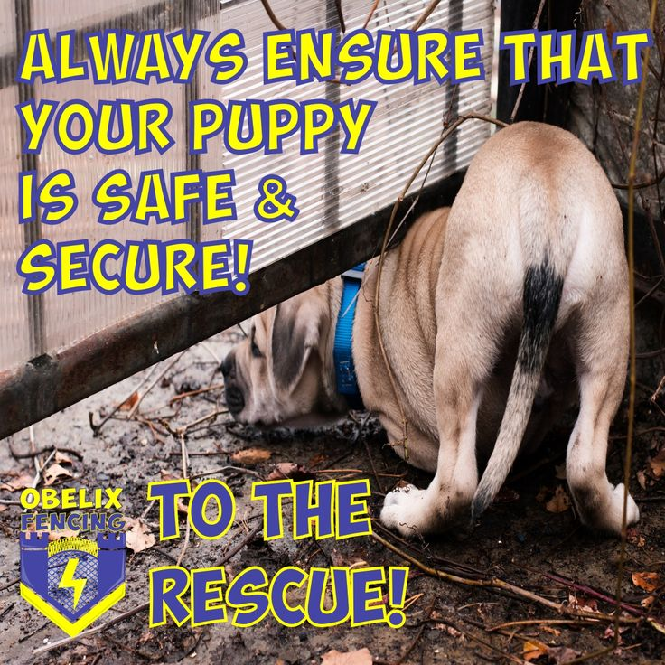 We are going to admit that we were absolutely devastated at the beginning of the year when we saw how many puppies were hurt due to fireworks. That image of that poor dog in Barberton broke our hearts so much, that this is the first time that we have been able to address the issue. First of all, Obelix Fencing would like to send our condolences to all the mommies and daddies who lost furbabies over the festive season. As we know that they become part of the family & one life lost is far too…