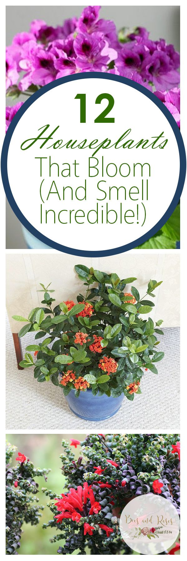 12 houseplants that bloom and smell incredible houseplants that bloom low