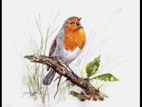 How to paint a detailed feathers on this orange chested Robin - YouTube