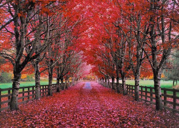 Rockwood Farm, King County, Washington - Most Photographed Driveway...
