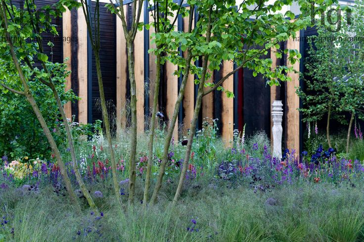Harpur Zahradní Obrázky Ltd :: Marcus Harpur Cloudy Bay Smyslová zahrada Zvýšený baldachýn hazel strom. Vysoké dubové panelu ploutve na černém zadní stěna trav v mlhavé schématu matrice výsadba tmavě fialové kosatce bílá mramorová socha design: Andrew Wilson sponzor: zataženo Bay
