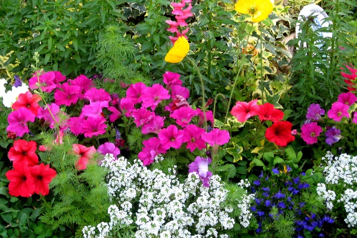 Allysum, Petunias inseveral colors, with a touch of blue Lobelia.