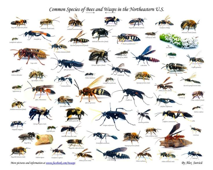Images of Different Types Of Bees