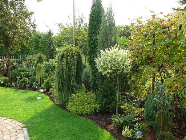 Мой сад - 2012   60 фотографий