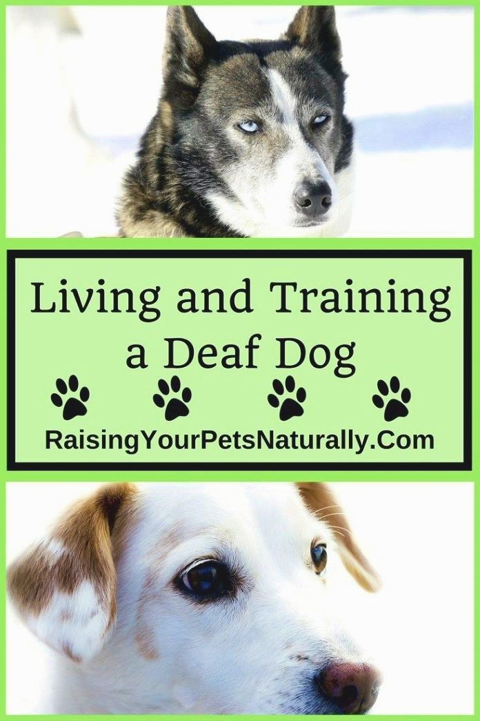 Dog training guide - Inform your friends and guests how you