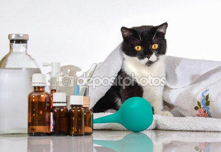 Больные кошки на столе с лекарствами — Стоковое фото © kulkann #119424352