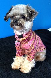 Ravelry: Fur Kids Sweater - Sweet and Sassy Toy Size Dog Sweater pattern by Cricket Toomey