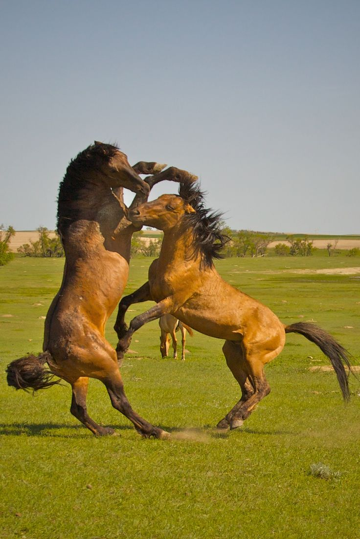 55 best spirit ghost horses that intrigue us images on pinterest