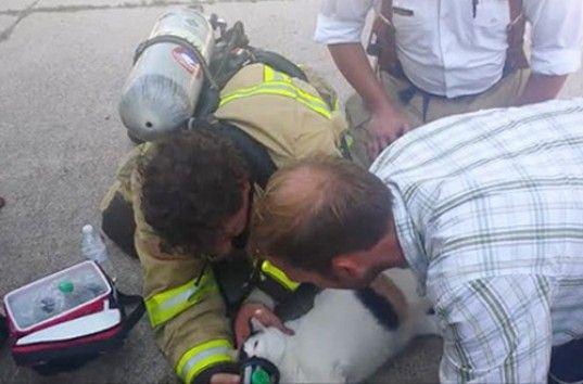 В США пожарные спасли кошку с помощью маленькой кислородной маски (ВИДЕО)
