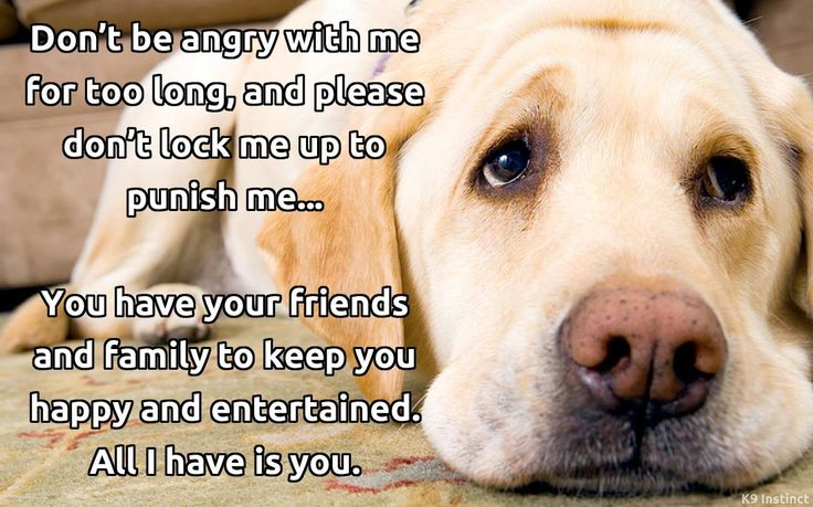 All i have is you to my dog all i need is you dog
