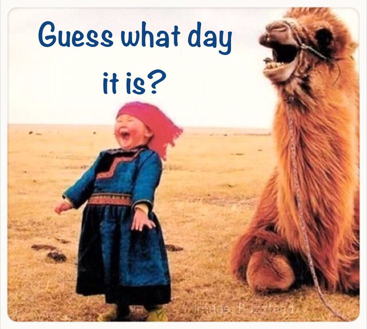 Wednesday funny  Cute camel  Animal humor  Middle of the week  Hump day ...