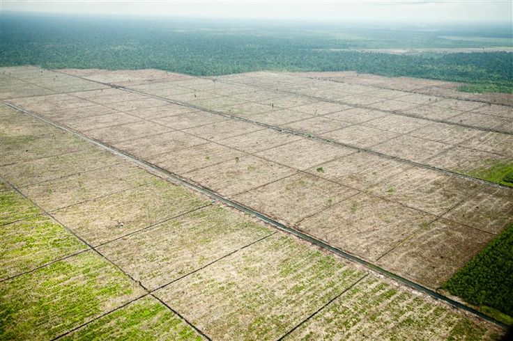 Forest Destruction in Sumatra -  Viewed from the air, the destruction of natural rainforest to make way for plantations to produce pulp paper. The plantations for paper are owned by Asia Pulp and paper (APP), the paper arm of Sinar Mas. © Jeremy Sutton-Hibbert / Greenpeace