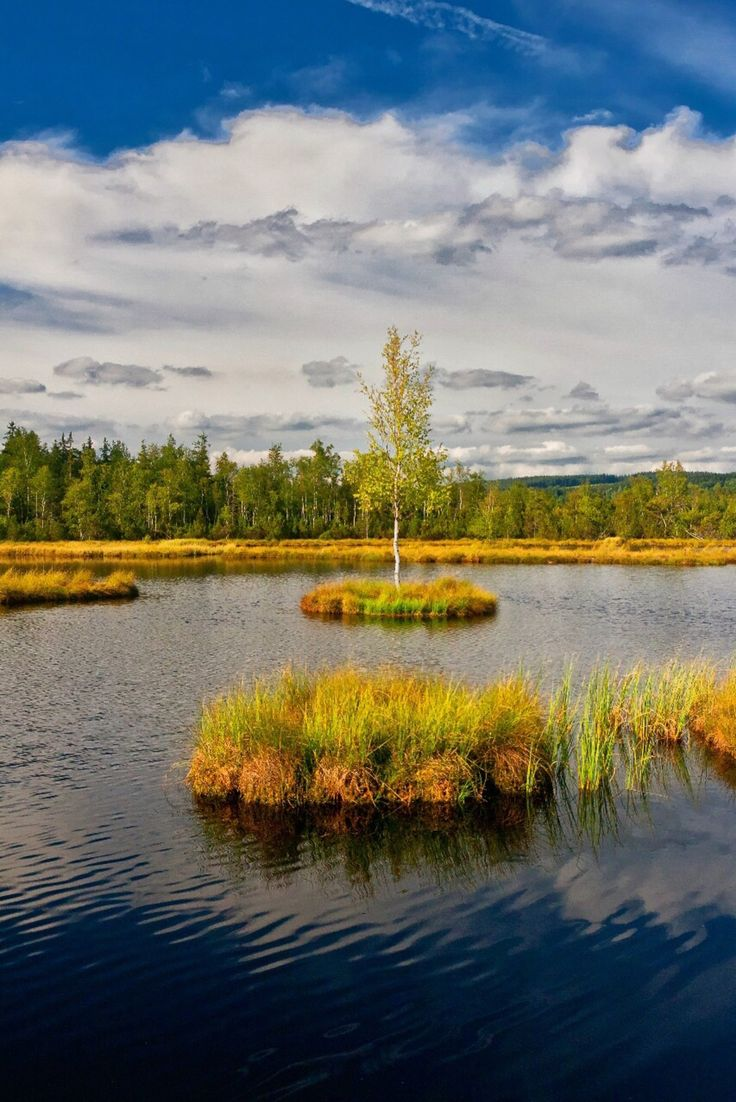 August 2015 Chalupská slať, Šumava, Czech republic Swamp lake in highmoor Chalupská slať is the biggest in country with 1.2 hectars and...