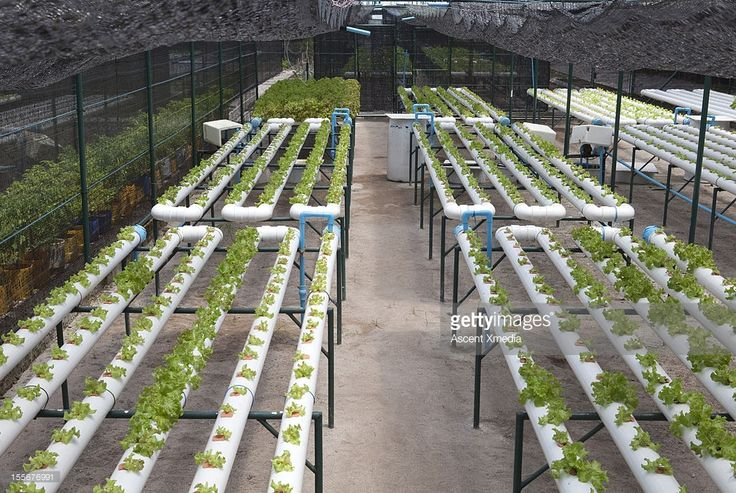 Hydroponic continuous flow NFT facility for growing lettuce. I believe the large pipes could have been placed closer together for greater efficiency.