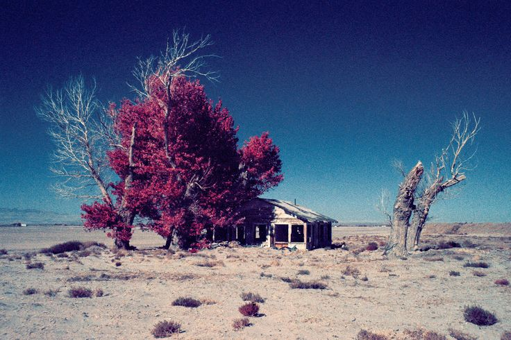 https://flic.kr/p/REhrji | dustbowl (color infrared). mojave desert, ca. 2016. | abandoned farmhouse in the antelope valley area of california's mojave desert. nikon N90s, 28-105mm f/3.5-4.5D, B+W 099 infracolor orange filter. film: kodak ektachrome color infrared EIR 400. lab: E-6 processing at iconLA, los angeles, ca. scan: nikon coolscan 5000.