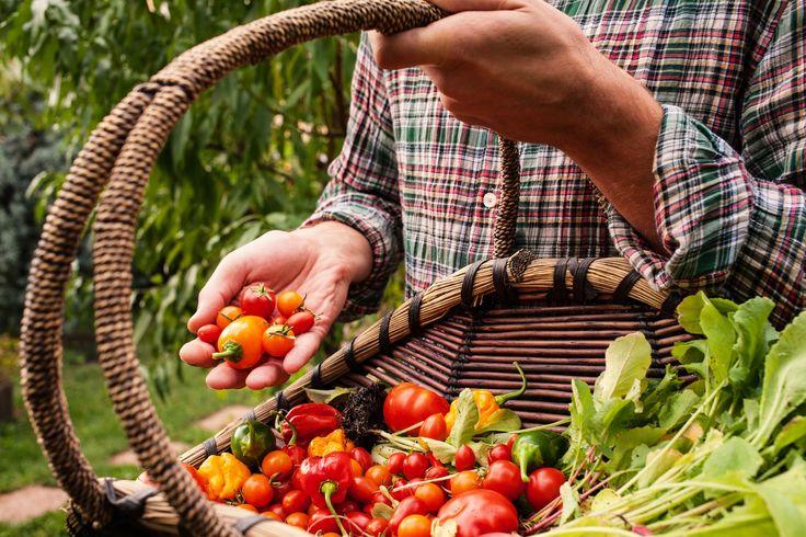 Rośliny są jak ludzie – lubią się i nienawidzą. Co sadzić razem, a co osobno? | garden tips howto