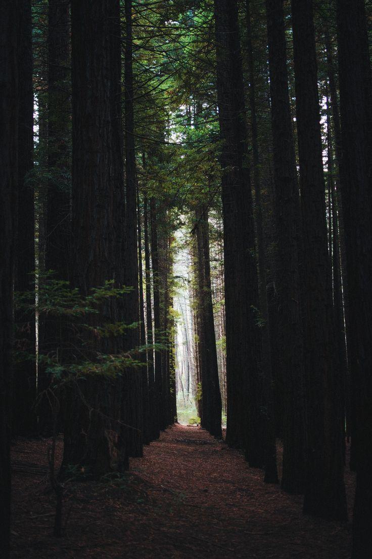 East Warburton Redwood Forest, AustraliaTumblr   Instagram   Website   Shop