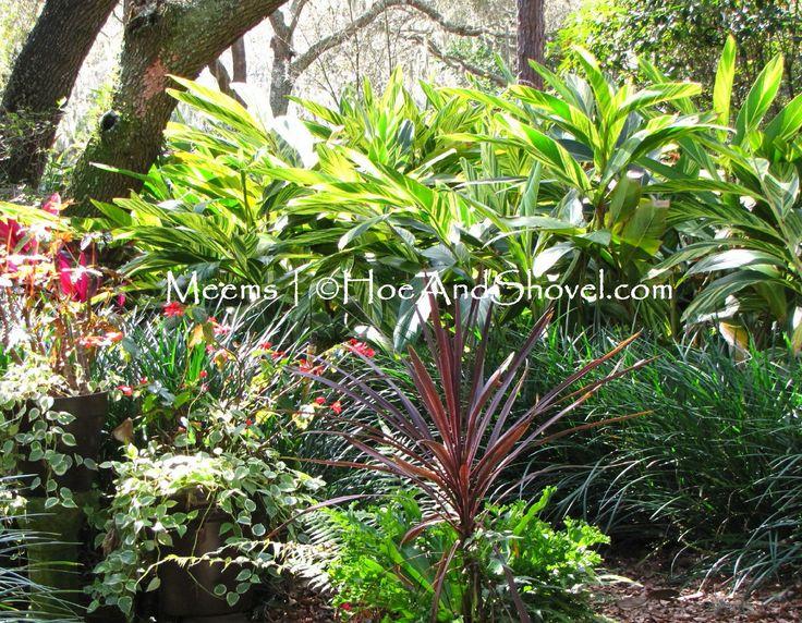 135 best Louisiana gardening images on Pinterest ...
