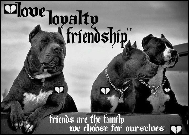 Loyalty >> pitbull love loyalty friendship - Google Search | Pitbull Lover | Pinterest | Loyalty friendship ...