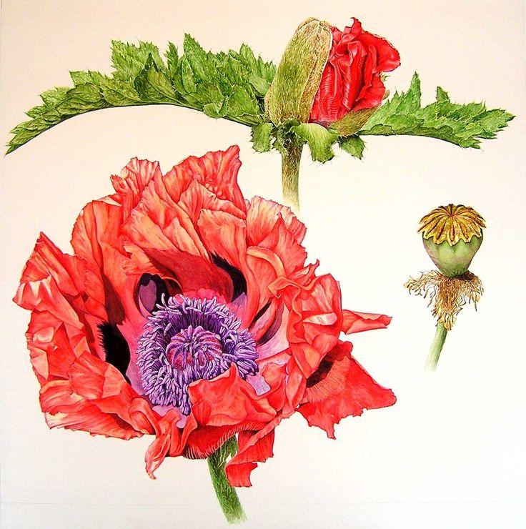 http://www.soc-botanical-artists.org/artist/sue-linton/