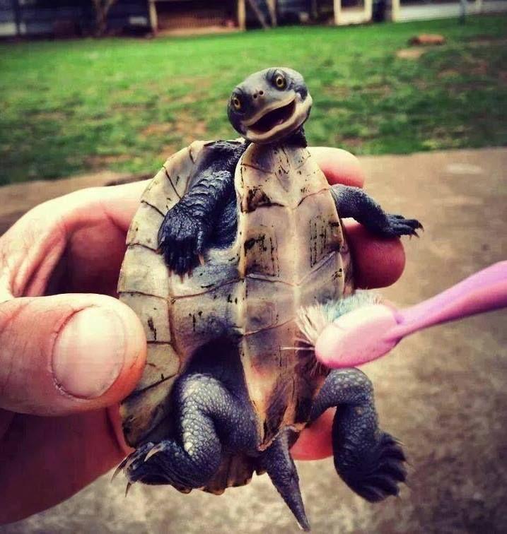 Tortoises love a good belly scrub!!