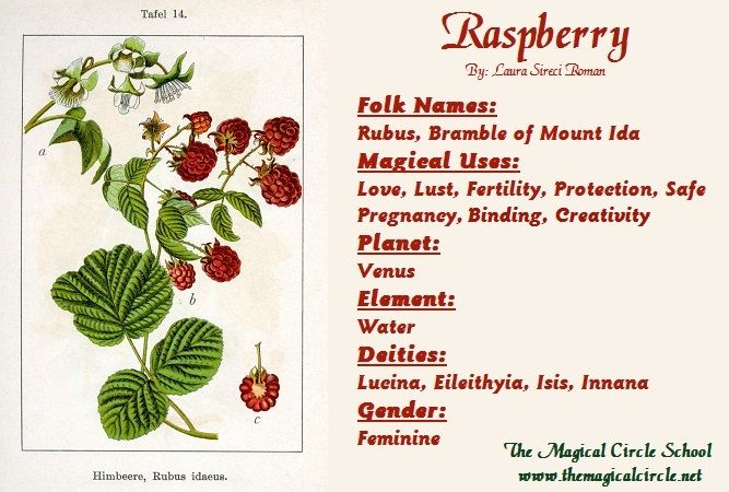 Raspberry Magical Properties - The Magical Circle School - www.themagicalcircle.net